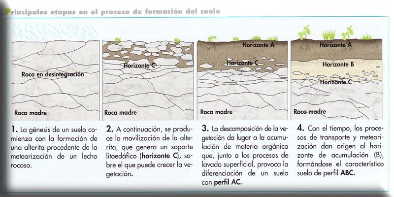 BiologíaSur - Procesos geológicos externos y sus riesgos
