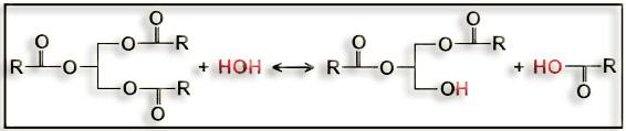 enzima lipază de ardere a grăsimilor oxibutinina pierde în greutate