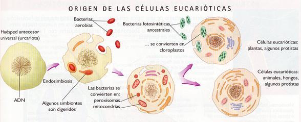 Biologíasur Teoría Celular