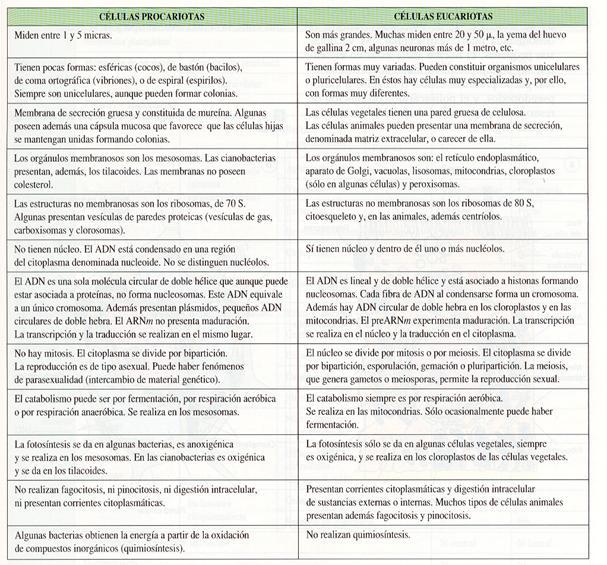 2 2 Célula Procariota Y Eucariota Diversidad Celular