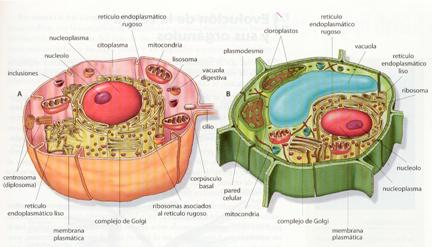 Procariótica Y Eucariótica