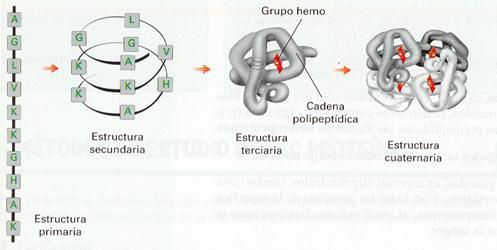 Biologíasur Proteínas